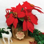 Mum Christmas Poinsettia 6 Artifical Flowers Red (38cmH)