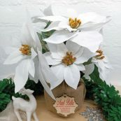 Aunty Poinsettia Potted 6 Artifical Flowers White (38cmH)