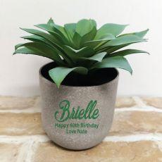 Aeonium Succulent in Personalised  60th Birthday Pot