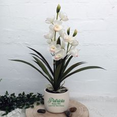 Orchid Cymbidium in Personalised 80th Birthday Pot