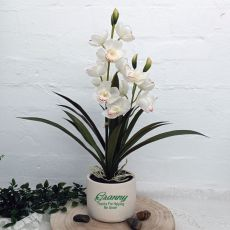 Orchid Cymbidium in Personalised Pot For Grandma