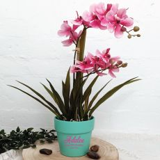 Orchid Ascocenda in Personalised 80th Birthday Pot